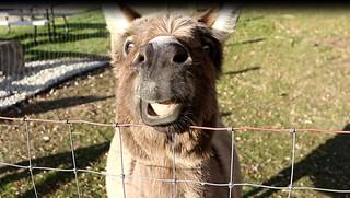 Donkey | by TeleFragger / RootBreaker