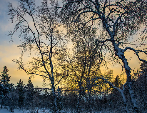 winter sunset finland lapland lappi kaamos