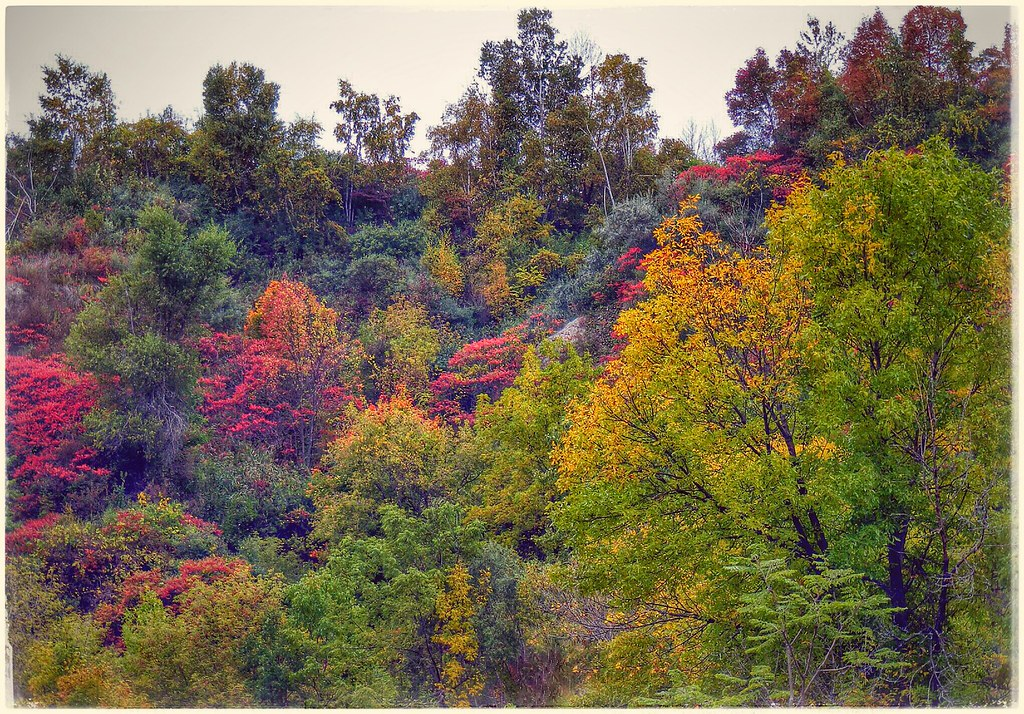 Bluffers Park, Fall, 2014