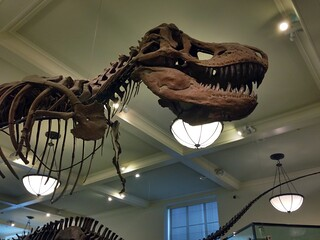 T-Rex at the American Museum of Natural History | by Mrs. Gemstone