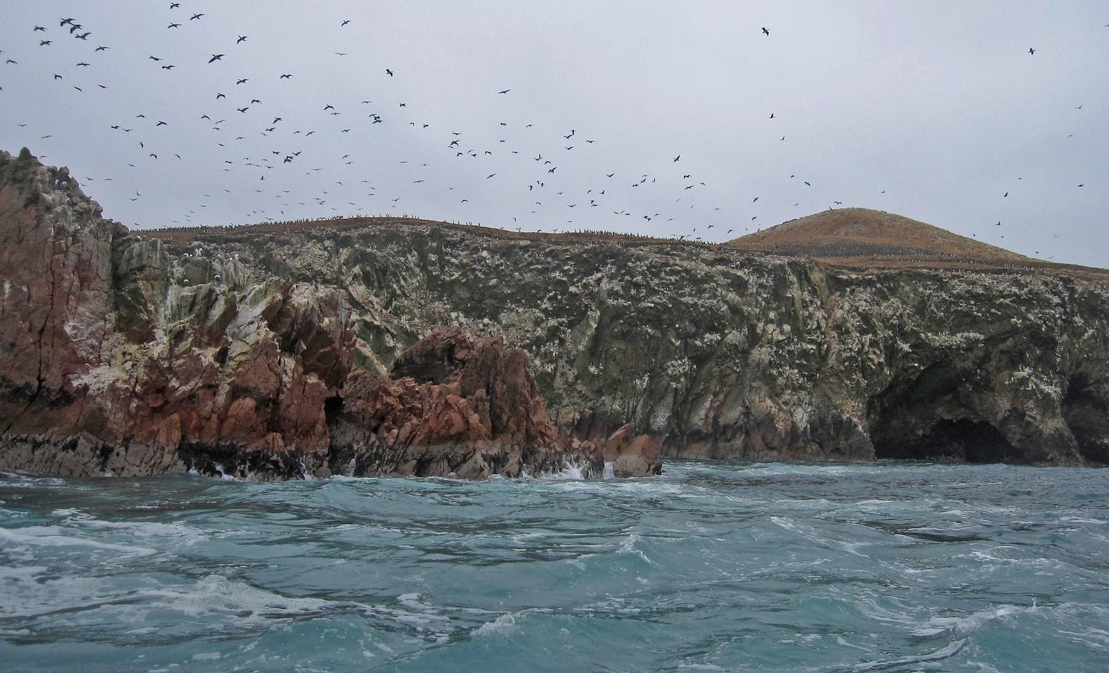 Islas Ballestas 102
