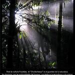 Proyecto Amazonía