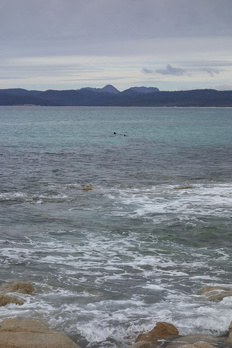 Freycinet - Dolphins at Friendly Beaches | by minuseleven
