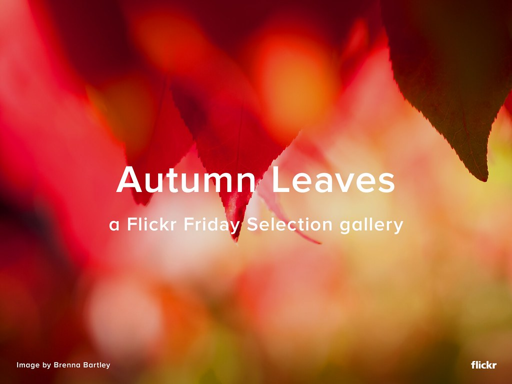 Flickr Friday Selection Gallery - Autumn Leaves