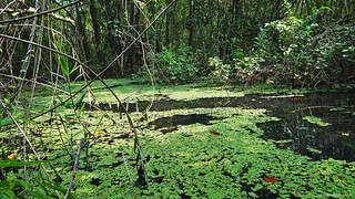 Pond in Kumarakom Bird Sanctuary | by Syed Zohaibullah