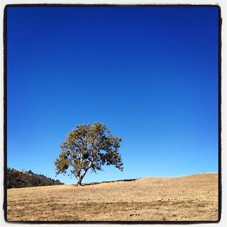 Mountain tree. #airstream #airstreamdc2cali #california