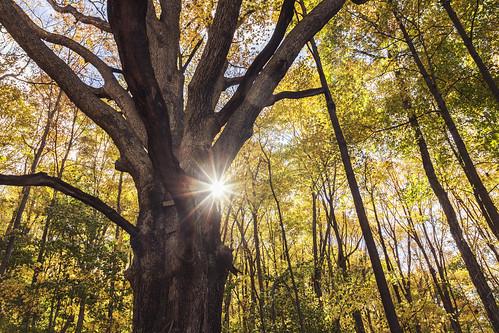 morning autumn sun ny newyork foliage carmel putnamcounty