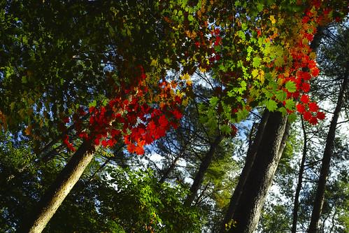 RGB Autumn leaves