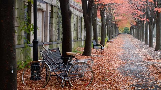 Along Nassau Street, with bicycle