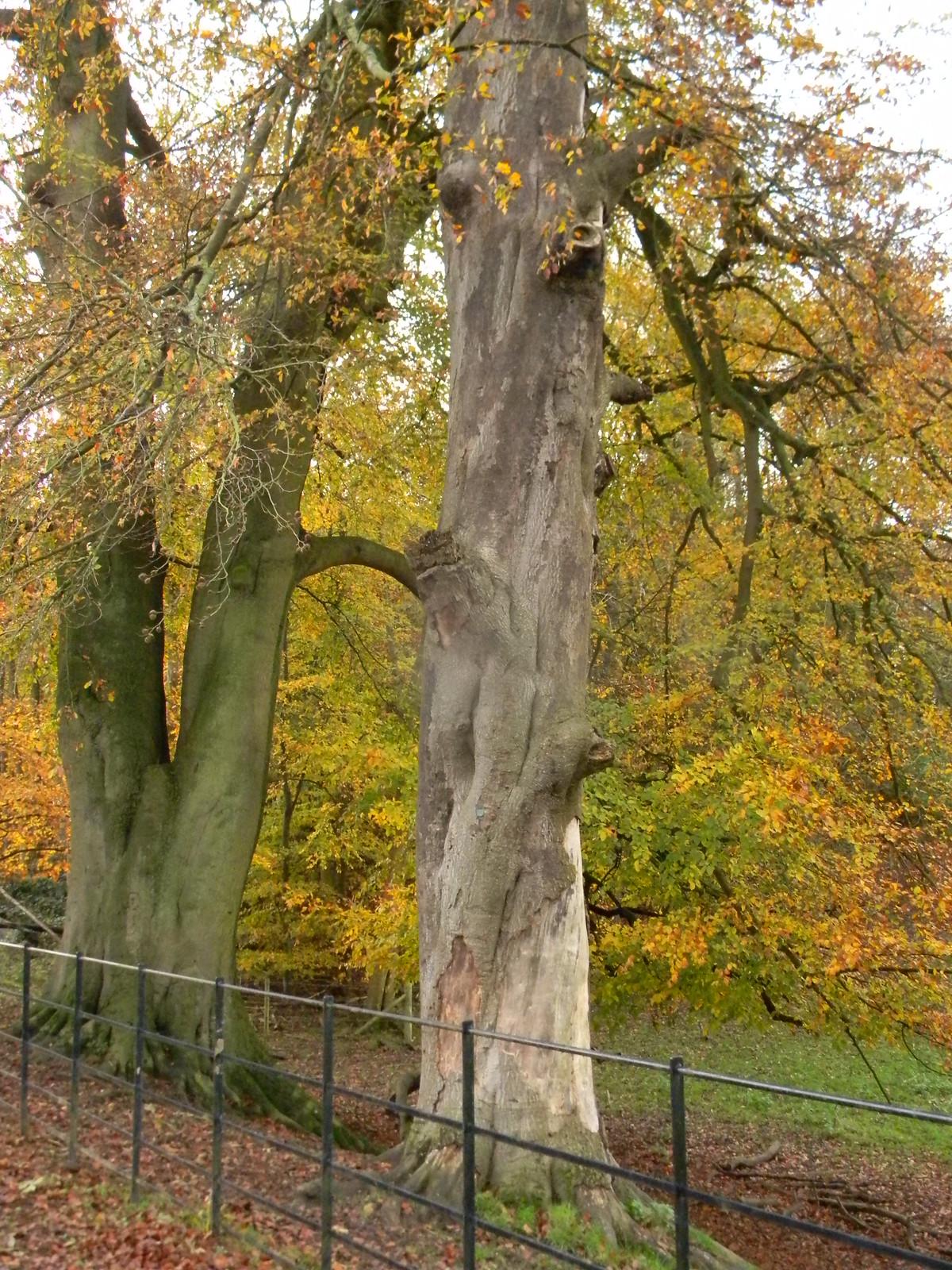 Autumn trees Merstham to Tattenham Corner