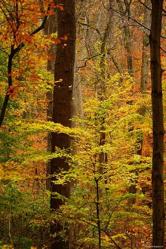 californiawoodspark 704000gssmsony a77mk2 raphaelkopanphotography 70400gssmsony sony