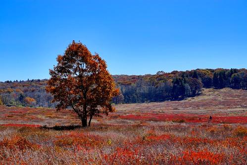 new travel autumn sky fall landscape countryside fallcolor bright outdoor shenandoah bigmeadows shenandoahnationalpark