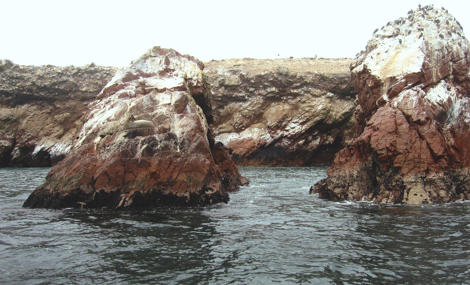 Islas Ballestas 62