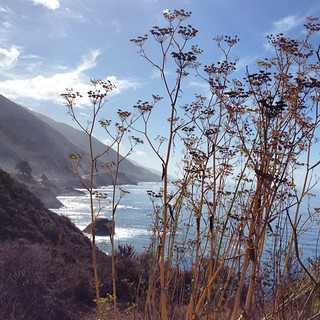 Fennel in the foreground. Big Sur CA. #airstreamdc2cali #california #bigsur