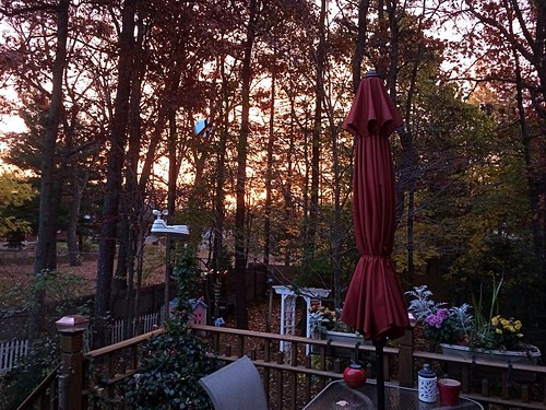 trees sunrise backyard deck apple5s