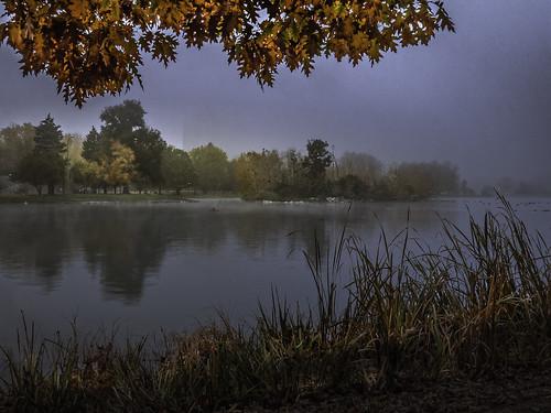 citypark denver downtown fallcolors fall red orange fog olympusomdem1