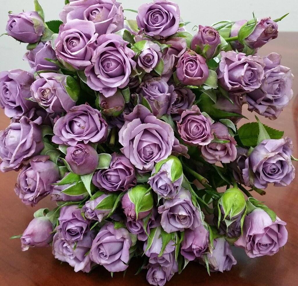 мире шиноби кустовые розы сорта сиреневого цвета фото маркетологов сегодня