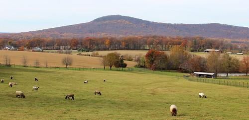 fallcolor sheep meadow maryland vista sugarloafmountain montgomerycountymaryland