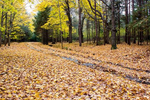 road autumn trees orange green fall grass leaves yellow landscape victoriapark path truro