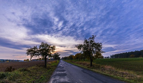 blue apple trees grass autumn czechia road moravian sunset sunlight sky season scenic scenery rural plant outdoor nature magical landscape land idyllic horizon green field farm evening environment day countryside country cloudy clouds cloud beauty beautiful background agriculture