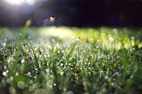 pentax k5 bokeh garden lazio italy perspective depthoffield outdoor grass flare lensflares kepcorautowideanglemc28mm128 bright plant landscape field stefanorugolo