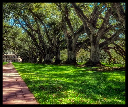 new trees tree nature oak nikon orleans louisiana unitedstates arbres plantation mansion arbre voute oakalley louisiane oakalleyplantation étatsunis d90 nouvelleorléans nikond90 étatdusud
