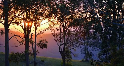 sunset silhouettes landscape tamborinemountain sequeensland queensland australia sundown mounttamborine