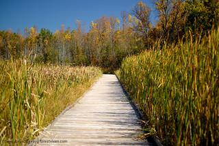 Marsh Boardwalk   by The Forest Vixen's CC Photo Stream
