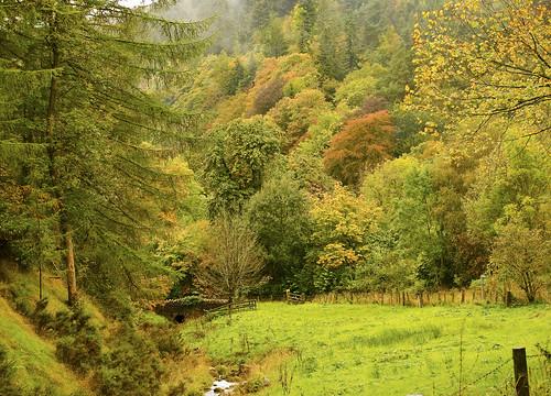 wood bridge autumn trees water wales landscape stream view northwales nikon5100 panoramaautumn