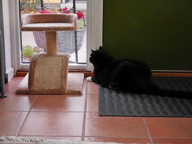 The window watcher Tussi