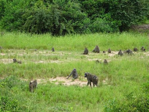 uganda oeganda westernregion buliisa