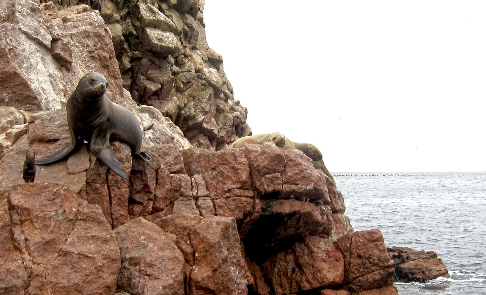 Islas Ballestas 85