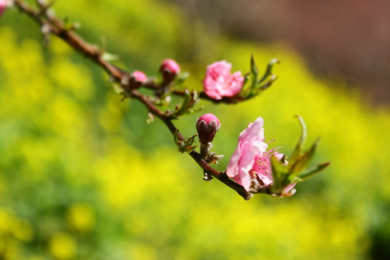 2014-03-16_00103_高松山