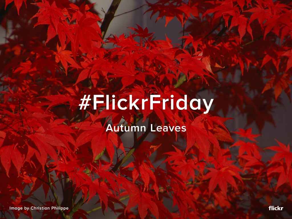 Flickr Friday - Autumn Leaves
