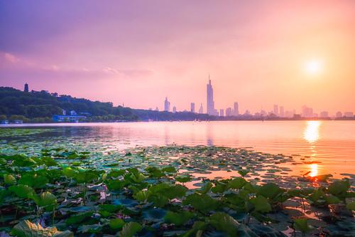 xuanwulake lake sunset lotus waterlily nature city sun twilight dark dusk skyscraper building architecture hill hdr summer nikon nikond800 tamronsp1530f28