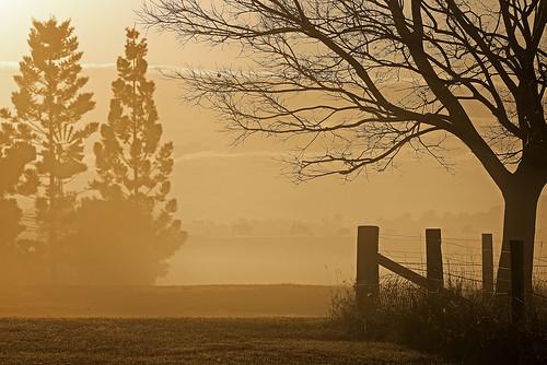 winter fog sunrise landscape earlymorning oxleycreekcommon sigma150600mmf563dgoshsmsports sigmateleconvtc1401nik