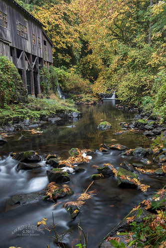 autumn color colour water leaves creek woodland river us washington stream unitedstates cedarcreek 2015 cedarcreekgristmill