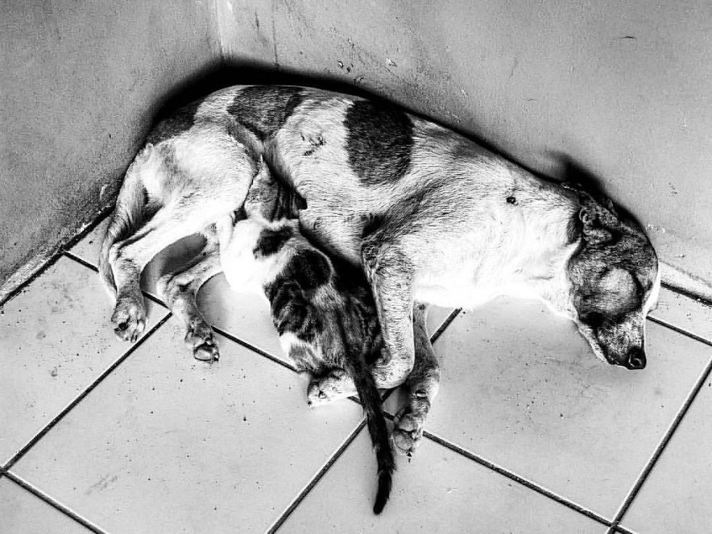 Dog And Cat Sleeping Together Animal Cute Dog Cat An Flickr