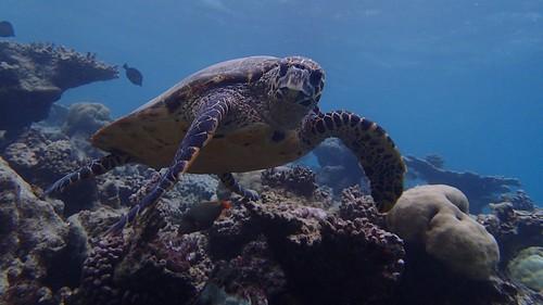 Snorkeling Kandolhu house reef