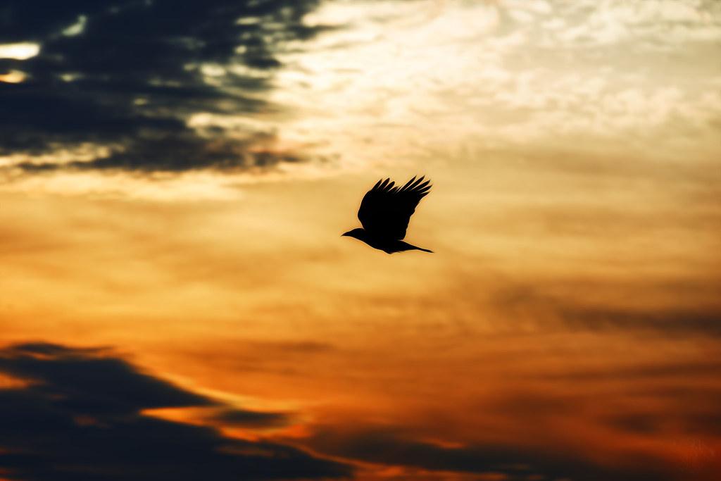 Crow at Autumn Sunset