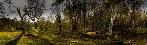xdop johnherzog napanee ontario canada trees flora forests bushes