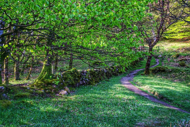 A wall, a tree and a path
