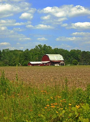 red field barn rural michigan farm country farming crop ag agriculture redbarn fairweather raytownship