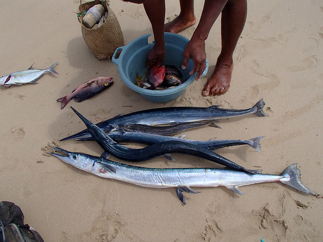 Madagascar9-122.jpg