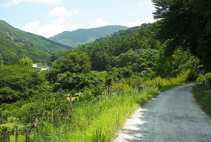山之辺の道