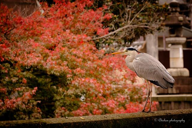 京都~autumnal tints