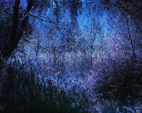 night bokeh landscape nature nikond810 nikon light droplets drops jeanmarieshelton jeanmarie jeanmariesphotography