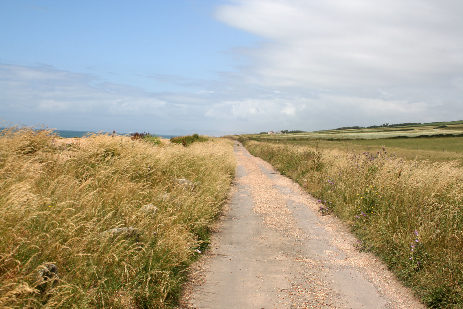 Coast road between Abbotsbury and West Bexington