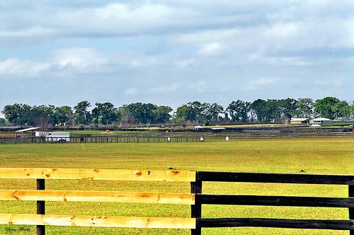 field grass rural florida farm fences pasture ocala