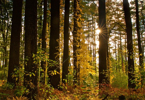trees fall nature woods newengland ivy autumncolors sunray